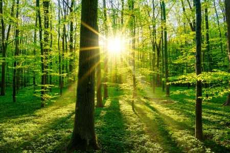 Morning forest - rays, grass, spring, morning, trees, forest, sun, glow, beautiful, summer, sunrise