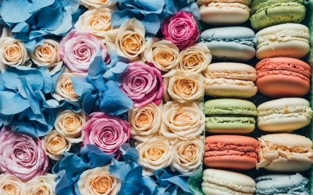 ♥ - macaron, pink, blue, dessert, sweet, colorful, food, rose, valentine, card, cookie, flower