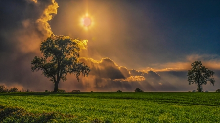cloudy day - sun, tree, cloudy sky, meadow, 4K