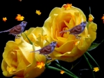 Yellow Roses And Birds