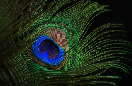 Peacock Feather Textures Abstract Background Wallpapers