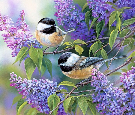 Chickadee Duo - spring, lilacs, painting, birds, songbirds, blossoms