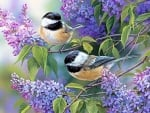 Chickadee Duo