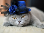 fashion cat :)