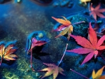 Maple leaves in water stream