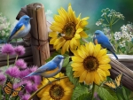 Songbirds and sunflowers