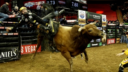 Cowboy and Bull riding - Other