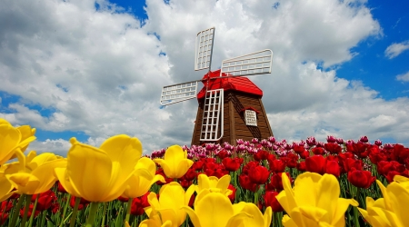 Holland mill - beautiful, tulips, holland, colorful, windmill, flowers