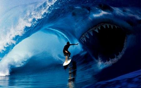 Shark Attack Surfer Sharks Animals Background Wallpapers