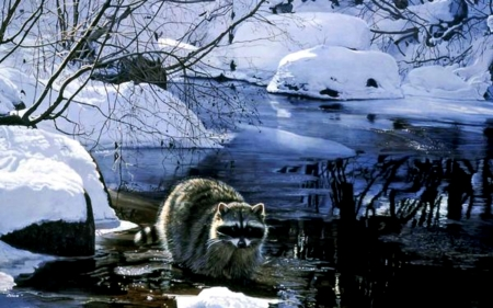 Cool Pause - Paws, Water, Raccoon, Snow