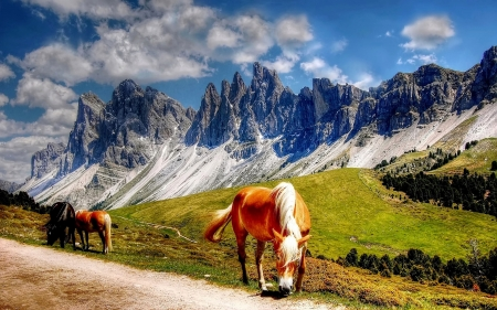 South Tyrol - Alps, South Tyrol, Italy, horses
