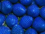 Yes Blue Strawberries