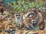 Raccoon Family by the Creek