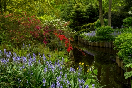 wild flowers - gardens, campanula, pond, parks, photography
