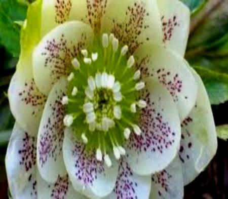 Hortofilia Unique Rare Flowers , Flowers \u0026 Nature Background