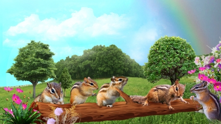 Chipmunks on a Log - rainbow, spring, trees, play, field, playful, chipmunks, sky, flowers, summer