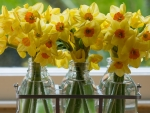 Daffodils in Glass