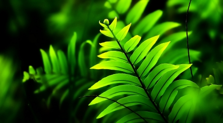 Ancient plant - photography, fern, ancient, green, plant, prehistoric, nature, foliage