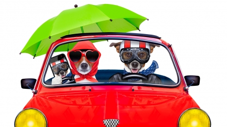 :) - green, car, umbrella, caine, funny, dog, animal, red, holiday, phone