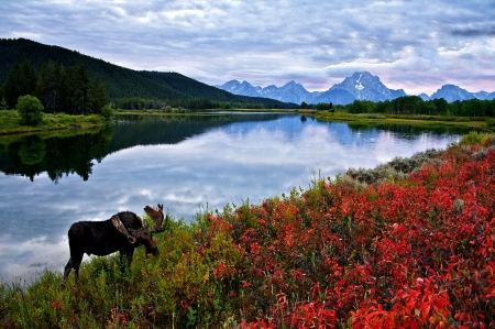 Sky Mountains Lake Flowers And Elk Moose - Flowers, Mountains, Sky, Moose, Lake, Elk