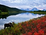 Sky Mountains Lake Flowers And Elk Moose