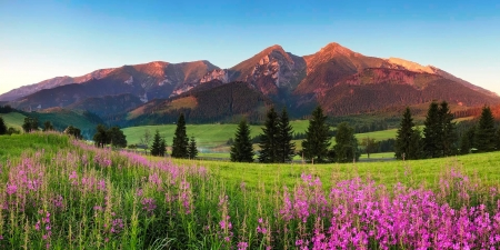 Beauty mountain panorama with flowers - hills, mountain, wildflowers, high, beautiful, panorama, Tatras, meadow, grass