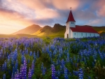 Chapel and Lupins