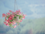 Pink flowers in a hanging basket
