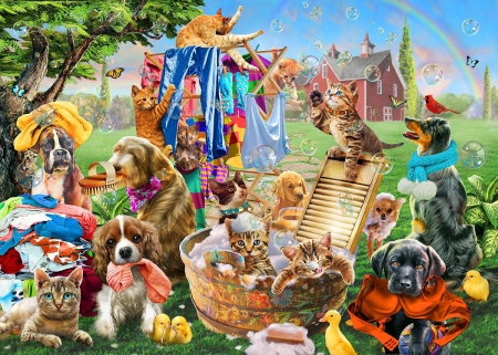 Laundry day - animal, dog, caine, bath, laundry day, cat, pet, fantasy, adrian chesterman, funny, pisici, kitten, puppy