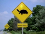 Turtle Crossing Be Careful Canada
