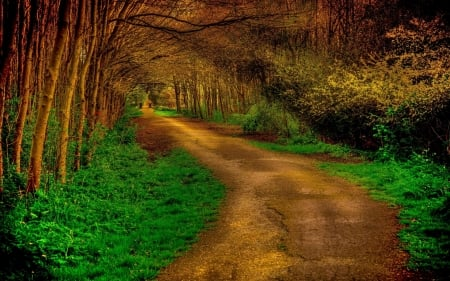 landscape - path, nature, forests, trees, photography