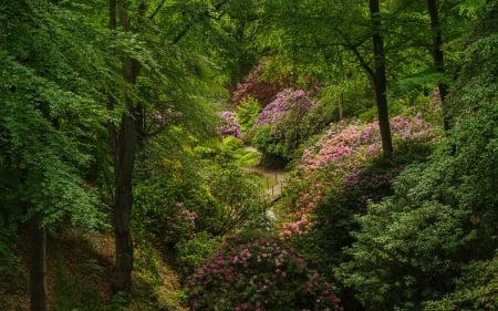 park - forest, parks, trees, rhododendron, Sweden