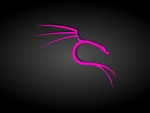 Black and Pink Kali Linux