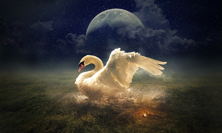 Dreamy Swan - Swan, moon, magnificence, Magical, evening, beautiful, Glowing, softness