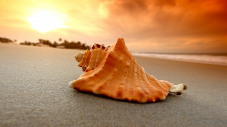 Listen to the Ocean @ Sunset - ocean, beach, seashell, sand, sunset, sky, clouds
