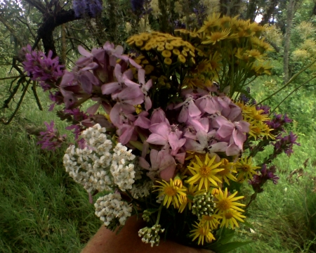 Beautiful wild forest flowers bouquet - wild forest bouquet, beautiful wild, beautiful bouquet, beautiful flowers
