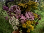 Beautiful wild forest flowers bouquet