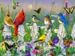 Birds and butterflies