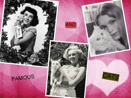Collage of famous - famous, collages, cats, actress