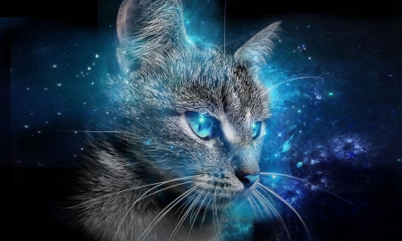 Awesome Abstract Cat Photography Abstract Background Wallpapers Download Free Architecture Designs Embacsunscenecom