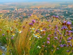 Wild Flowers over City