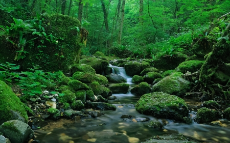 Mossy Stream in the Forest - Nature, Landscape, Trees, Streams, Forests, Rocks, Moss