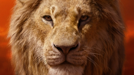 The Lion King 2019 Movies Entertainment Background
