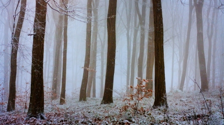 Snowy Mist - snow, fog, mist, nature, forests, winter