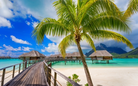 French Polynesia - tropics, sea, polynesia, rest, huts, vacation, ocean, french, beautiful, palms, beach, paradise, summer