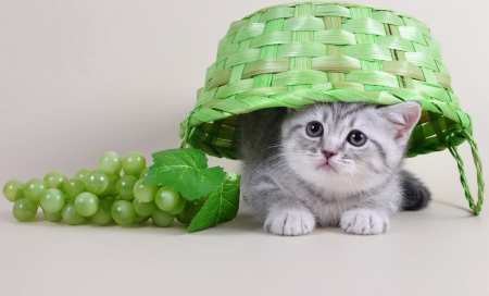 Cute kitten - animal, fruit, grape, cute, basket, cat, kitten