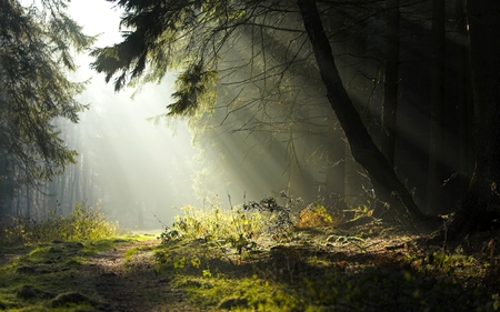 Obscure - forest, widescreen, woods with sun shining through, tree, obscure forest, misty, sun