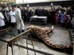 2 Year Old Giraffes Killed For Meat In Copenhagen
