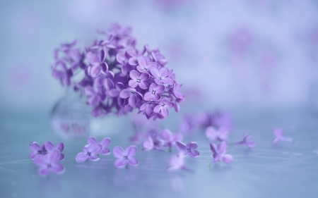 Beautiful Flowers - Macro, Flowers, Background, Lilac
