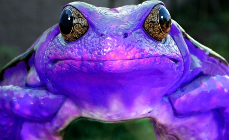 Purple Frog - frog, color, abstract, purple, art